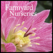 Farmyard Nurseries