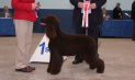 Championship Dog Show 6th - 9th Jun 2013