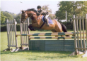 Show Jumping - Table A - Fortnightly at Durham's Farm Riding School