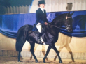 Royal London Horse Show: 29 August - 01 September 2013