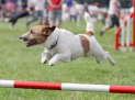 Kennel Club International Dog Agility Festival