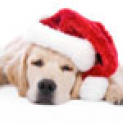 A Festive Guide Dog Treat