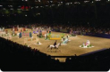 Woods Travel Limited - The London International Horse Show, Olympia