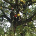 Tree climbing - May half-term family activity at Compton Verney
