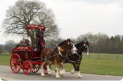 Woods Travel Limited - London Harness Horse Parade at Ardingly