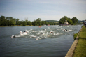 The Henley Mile
