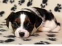 Puppy Socialisation Classes in Lichfield