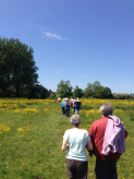 Health Walks in St Neots