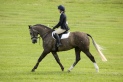 Unaffiliated Dressage Competition