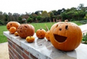 Pumpkin Parade in the Walled Garden