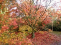 Autumn colour spectacular at Batsford Arboretum