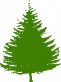Recycle Your Christmas Tree At Upton House