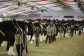Shire Horse Society National Show