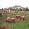 Learn to make a Living Willow Dome