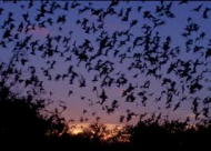Batty about Bats!
