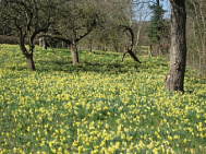 Spring Fayre and Daffodil Weekend