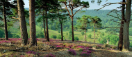 Ranger Will's Wildlife Walk on Wonderful Headley Heath