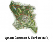 Epsom Common and Horton Walk #HorribleHistory @EpsomEwellBC