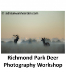 Deer Photography Workshop in Richmond Park with Adriaan Van Heerden @ avhphotography