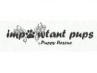 Impawtant Pups Puppy Rescue