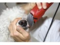 Snoopies - Dog and Cat Grooming - Colchester