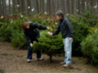 Cannock Chase Christmas Tree Sales