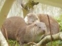 Tamar Otter & Wildlife Centre - Cornwall