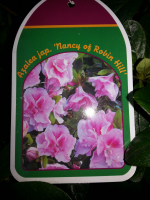 2 AZALEAS FOR £10 - Save £1.98