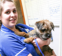 Free vaccinations for your dog - Conanvet Healthcare Plan