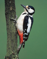 SPECIAL PRICE - £13.99 for Buckton Wild Bird Seeds