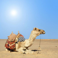 7 nights in Tunisia - £167.99 pp