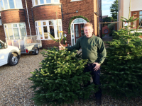 6ft Nordman Firs for just £35 each