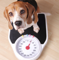 FREE pet weight and body condition check