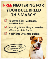 FREE neutering for Bull Breeds