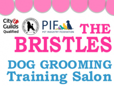 The Bristles Dog Groomer Training Salon