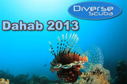 A diver? Fancy a diving holiday in Dahab, Egypt in April 2013