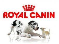Royal Canin Available at Willows, Wags and Whiskers!