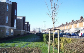 Gift of trees for Southend