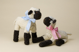 The Shropshire Sheep is Alive and Well, says Enjoy!  Shrewsbury
