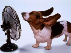 Top tips for looking after your pets during the hot Summer months