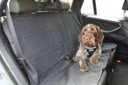 Travelling With Pets - Staying Safe
