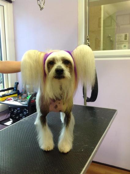Dog Grooming Worcester Park