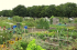 Southby Allotment Open Day