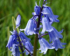 Bluebell Open Day at Perivale Wood