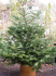 Where Will You Buy Your Christmas Tree from in Malvern?
