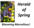 Herald of Spring in Ewell – Blooming Marvellous @epsomewellbc