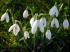 2014 Scottish Snowdrop Festival