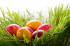Easter Activities and Fun in Wrexham