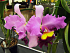 Solihull & District Orchid Society