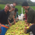 Cider Making in One Day